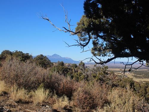 Land in Southwest Colorado : Mancos : Montezuma County : Colorado
