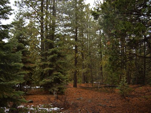Wooded Oasis, $210/Month : Bonanza : Klamath County : Oregon