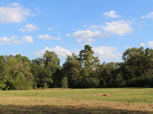 5 Easy Acres : Montgomery : Texas