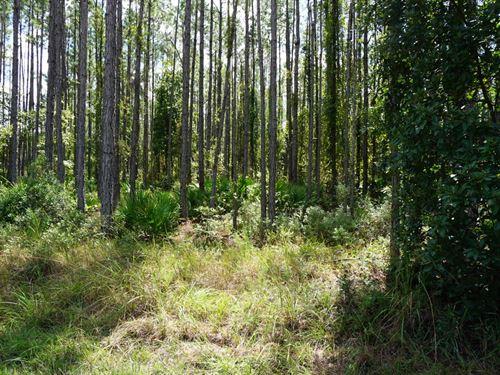 10.3 Acres to Build Your Dream Home : Callahan : Nassau County : Florida