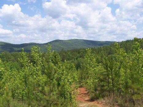 12+/- Acres Mountain View Land : Ashland : Clay County : Alabama