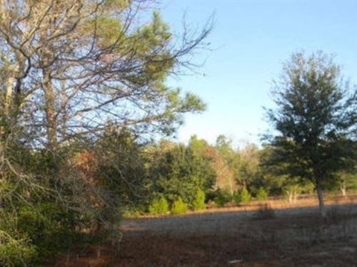 4.57 Acres A-600 : Hawthorne : Putnam County : Florida