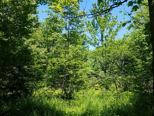 Penn Mountain State Forest Camp Lot : Steuben : Oneida County : New York