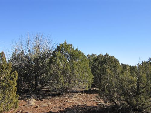 Perfect Family Spot Only $99/Mo : Show Low : Navajo County : Arizona