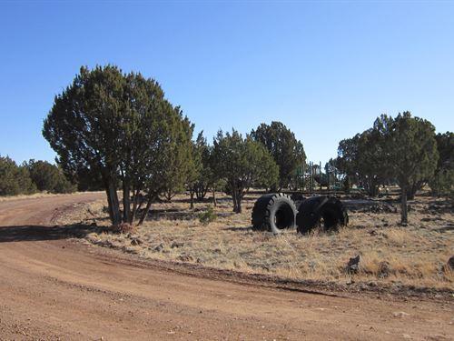 .25 Acres to Explore & Grow $99/Mo : Show Low : Navajo County : Arizona