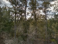 Versatile Lot on Paved Road No 311 : Interlachen : Putnam County : Florida