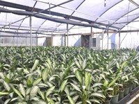 Mount Dora Foliage Nursery : Mount Dora : Lake County : Florida