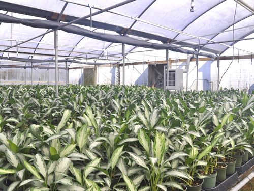 Mount Dora Foliage Nursery : Mount Dora : Lake County : Florida