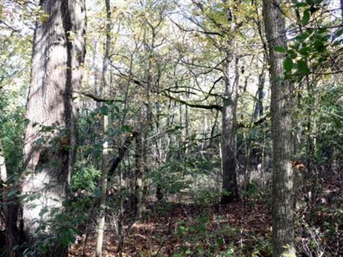 Wooded Hillside Overlooking Pond : Edgerton : Dane County : Wisconsin