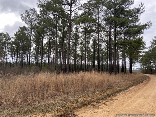Home Sites With Road Frontage : Wesson : Lincoln County : Mississippi