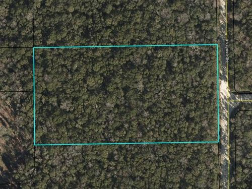 5 Acres Untouched Land Old Town : Old Town : Dixie County : Florida