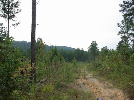 20+/- Acres - Pirvate Estate : Odenville : Jefferson County : Alabama