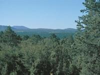 Arizona's Best Land Buy : Show Low : Apache County : Arizona