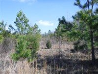 US 441 Jarrett Development Tract 1 : Nicholson : Jackson County : Georgia
