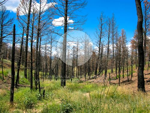 New Life Rises From The Ashes, 2Ac : Fort Garland : Costilla County : Colorado