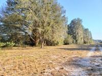 6 Acres, Orange Springs : Fort McCoy : Marion County : Florida
