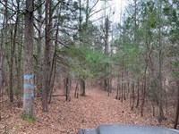 20 Private Wooded Acres : Rockmart : Polk County : Georgia