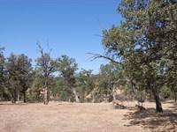 Ideal Lot on Cul-De-Sac : Cottonwood : Tehama County : California