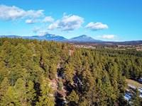 Wooded Mountain Lot, Electricity : Weston : Las Animas County : Colorado
