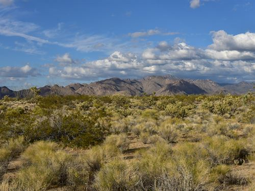 Have Some Fun and Adventure : Yucca : Mohave County : Arizona