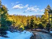 Wooded Mountain Lot, Road Access : Weston : Las Animas County : Colorado