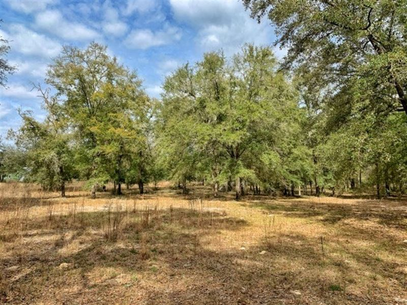 5 Acres High Springs, Gilchrist : High Springs : Gilchrist County : Florida
