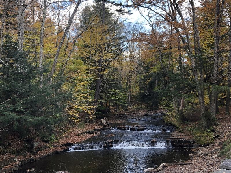 Prince Brook Fishing Camp Spot : Osceola : Lewis County : New York