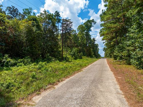 Wooded Lot w Paved Road & Utilities : Livingston : Liberty County : Texas