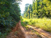 Wooded Lot Near National Preserve : Cleveland : Liberty County : Texas
