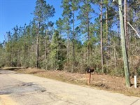 20 Acres Pine Grove Hunting Land &a : Picayune : Pearl River County : Mississippi