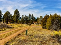 Lot w Road Frontage Near Ntl Forest : Heber-Overgaard : Navajo County : Arizona
