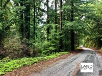 Secluded Redwood Forest Paradise : Felton : Santa Cruz County : California