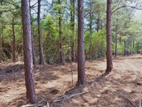 11.8 Acres Land For Sale Mature Tre : McComb : Pike County : Mississippi