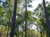 O'quinns Pond Farm, 5 Acre Lot : Milledgeville : Baldwin County : Georgia