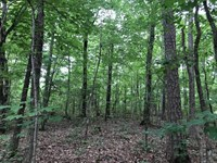 Scenic 6 Acres with 2 Home Sites : Odenville : Saint Clair County : Alabama
