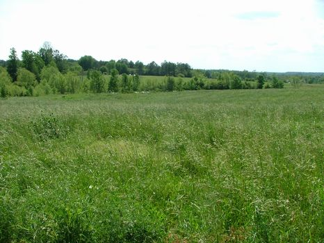 20+/- Ac Farm/Develop Opportunity : Sylvania : Jackson County : Alabama