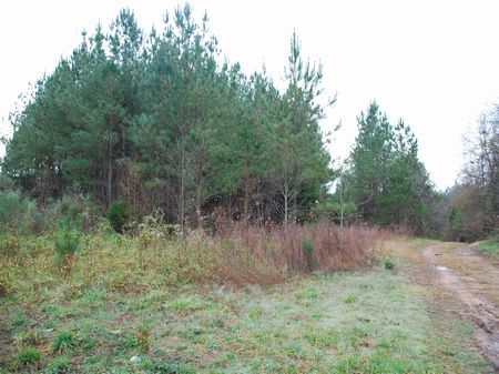 12.5 Ac. Recreational/residential : Buffalo : Union County : South Carolina
