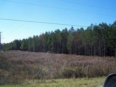 10 Acre Home Site : Ellaville : Schley County : Georgia