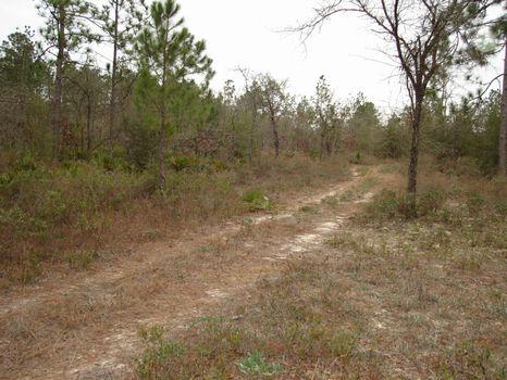 .74 Acres : Marianna : Calhoun County : Florida