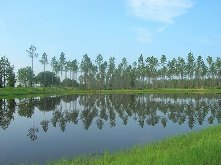 2 Acre Homesite : Jacksonville : Duval County : Florida
