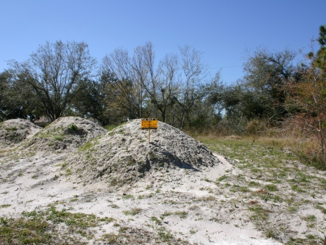 1/3 Ac.Cleared and Filled : Sebastian : Indian River County : Florida