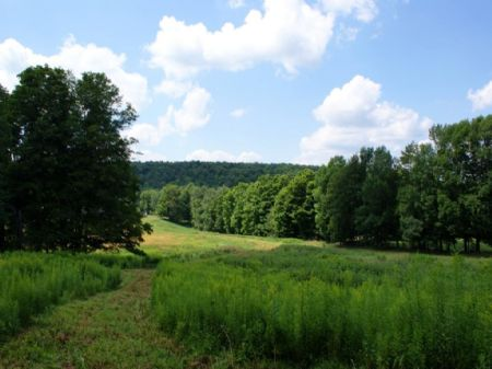 10 Acres- Northern Catskills : Jefferson : Schoharie County : New York