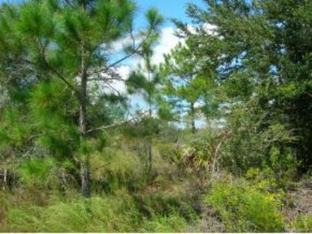 20 Acres In Cedar Key : Cedar Key : Levy County : Florida