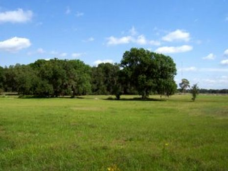 Boyette Acreage Farm : Lithia : Hillsborough County : Florida
