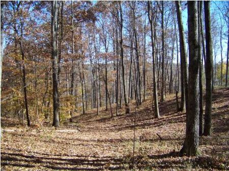 Foreclosures, Waterfront Lot : Smithville : DeKalb County : Tennessee