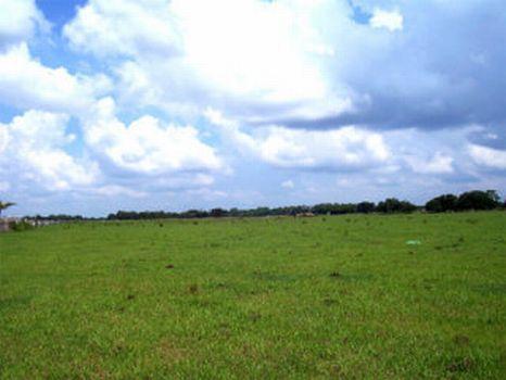 Serenity Acres - 10.49 Acres : Lithia : Hillsborough County : Florida