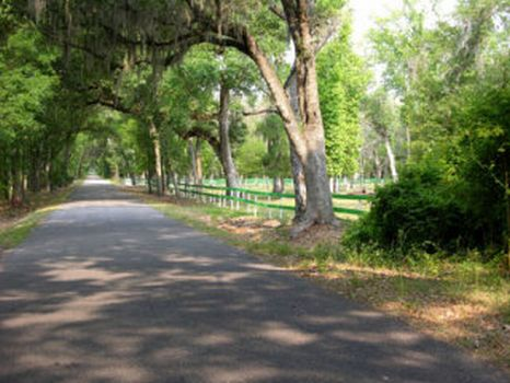 Webster Acreage : Webster : Sumter County : Florida