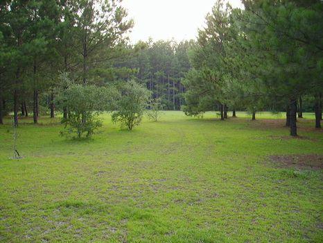 13.9 Acre Mini Farm : Statesboro : Bulloch County : Georgia