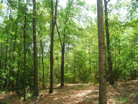 10.78 Ac, Cooley Springs On Creek : Chesnee : Spartanburg County : South Carolina