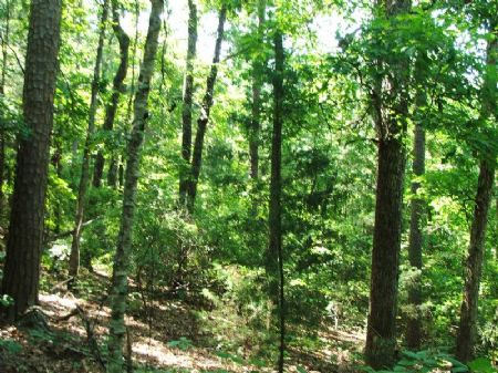 13 Acres Bordering National Forest : Brent : Perry County : Alabama